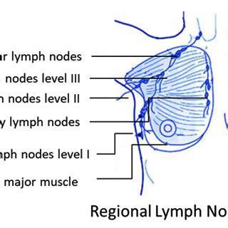 Lupus disease research paper